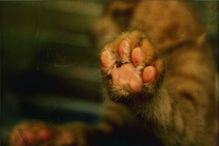 Katzentatzenfoto: amanda tetrault