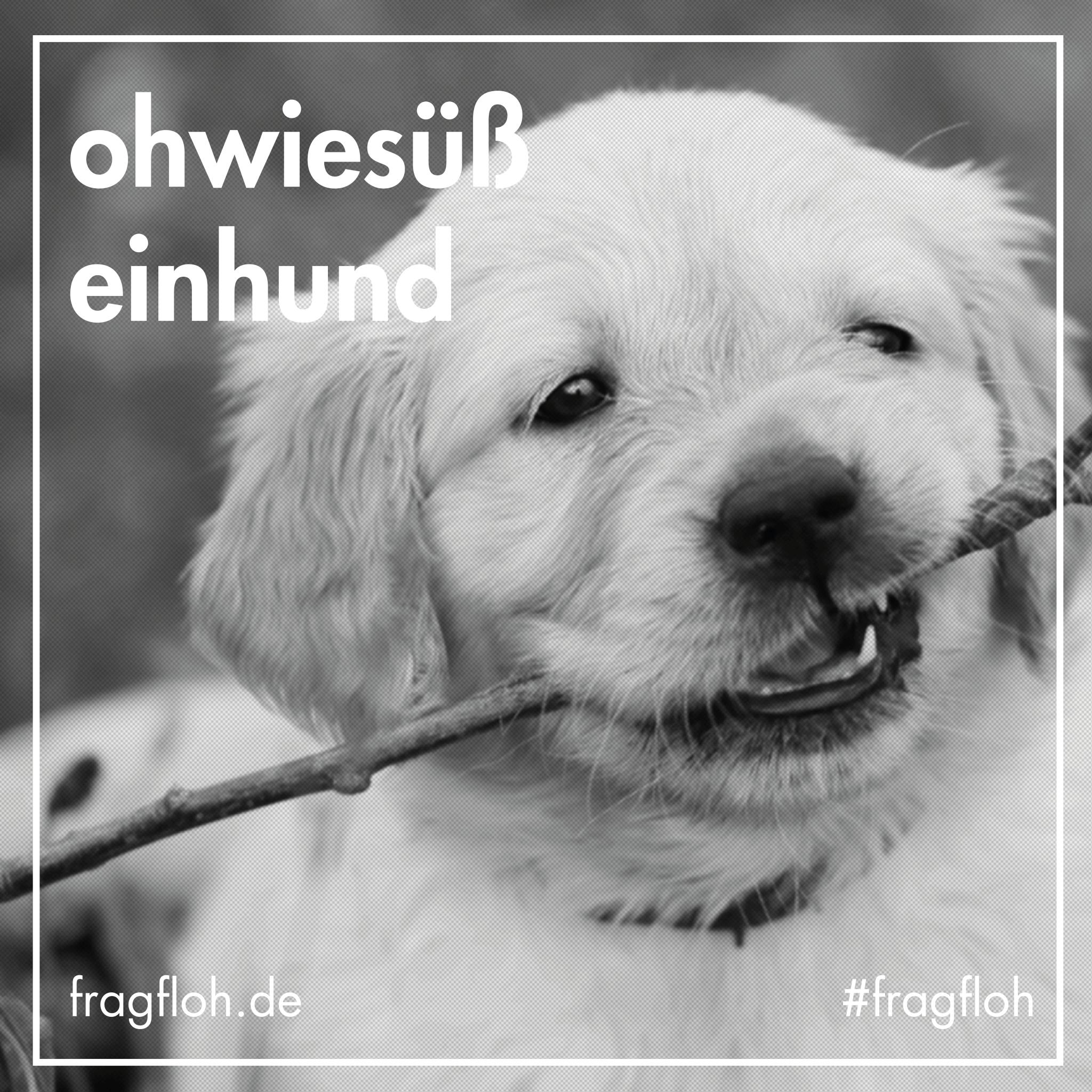 fragfloh-ohwiesuesseinhund-01
